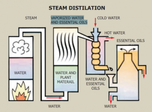 CBD steam distillation